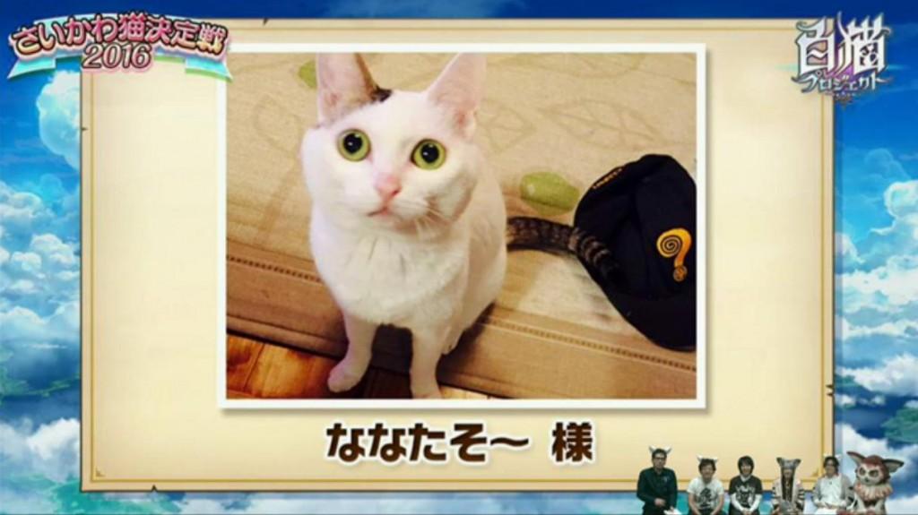 【白猫】ニコ生20162月22日_さいかわ猫決定戦201612