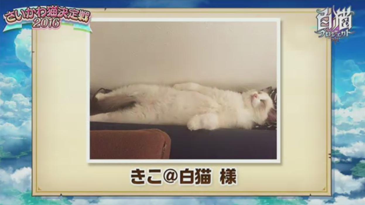 【白猫】ニコ生20162月22日_さいかわ猫決定戦201612A