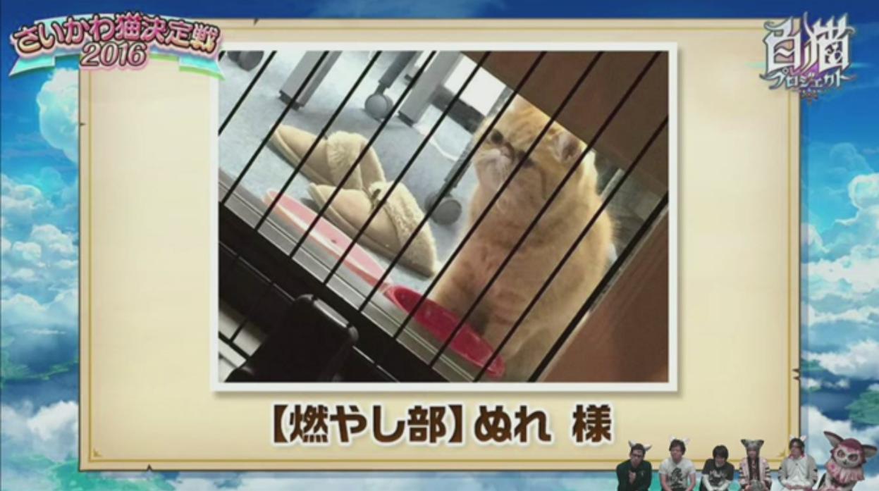 【白猫】ニコ生20162月22日_さいかわ猫決定戦201612B