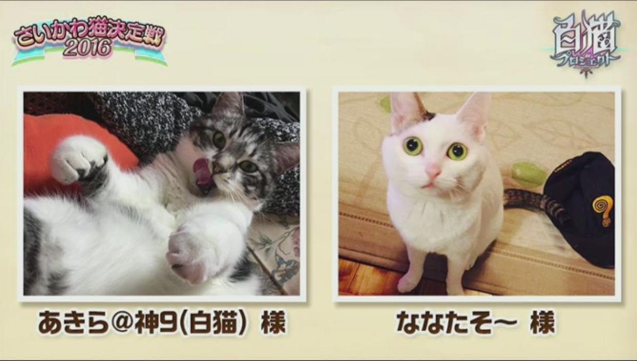 【白猫】ニコ生20162月22日_さいかわ猫決定戦201612D