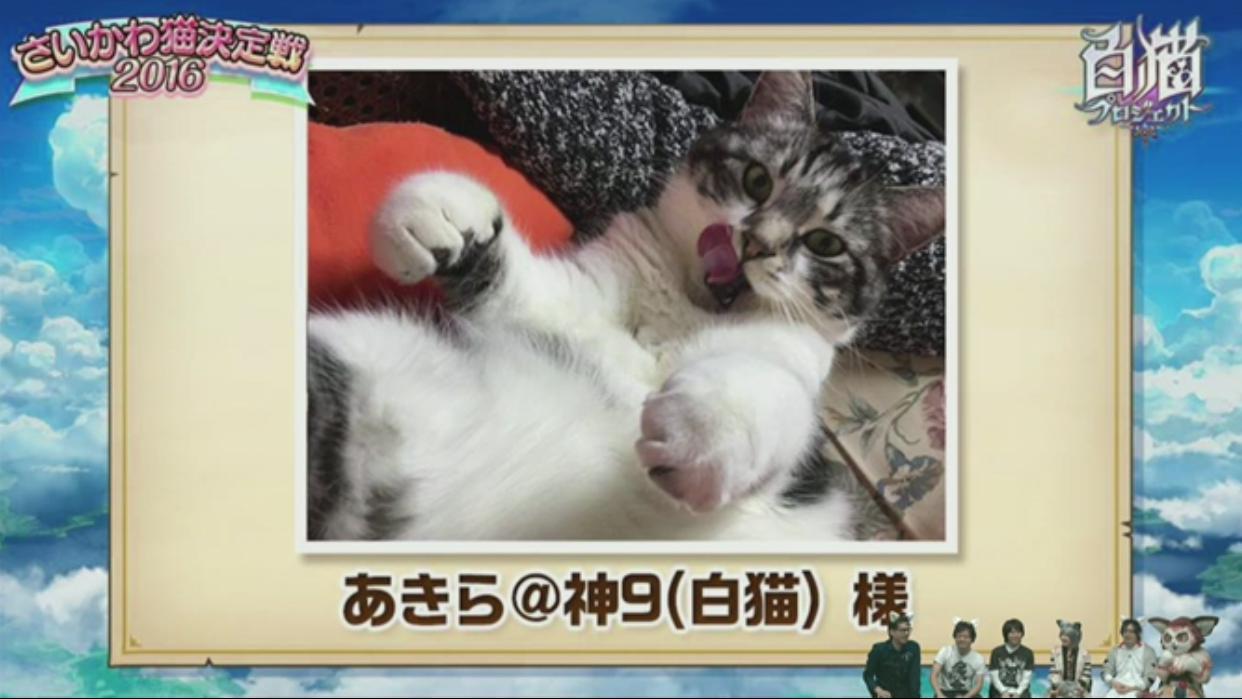 【白猫】ニコ生20162月22日_さいかわ猫決定戦201612E