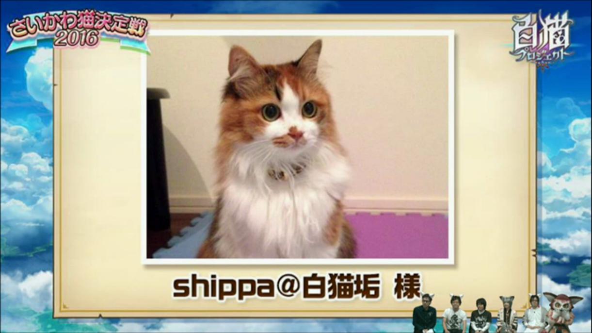 【白猫】ニコ生20162月22日_さいかわ猫決定戦201614
