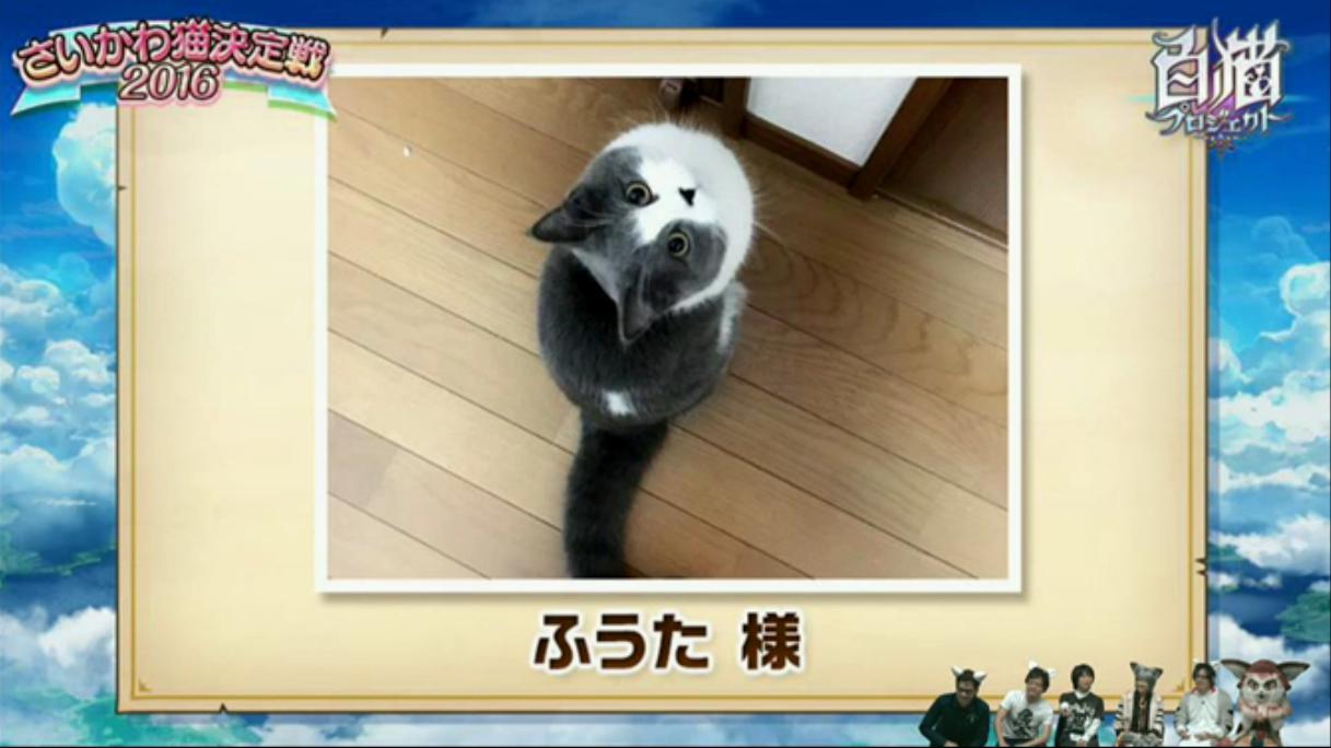 【白猫】ニコ生20162月22日_さいかわ猫決定戦201615