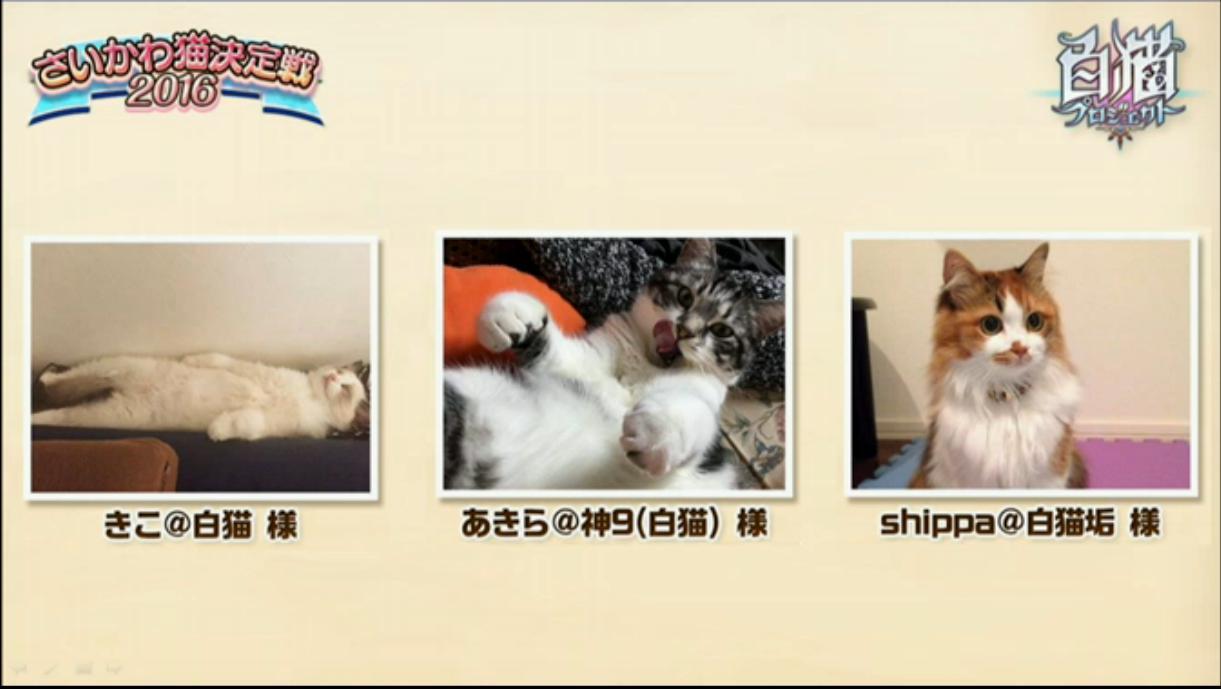 【白猫】ニコ生20162月22日_さいかわ猫決定戦201616