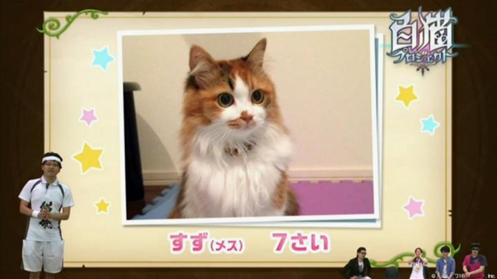 【白猫】ニコ生5月26日最新情報17